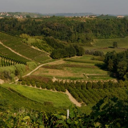 Cantina e vendita vini del Roero - Cascina Ca' Rossa