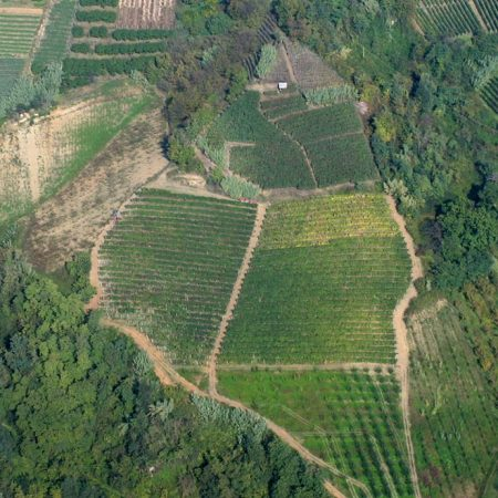 Vigneto Valmaggiore - Azienda Agricola Cascina Ca' Rossa